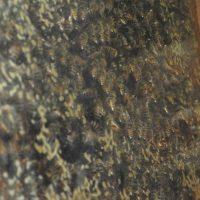 observation-hive-2